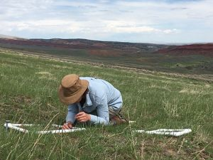 checking the success of seed pods planted on TNC's Red Canyon Ranch Preserve in Wyoming.