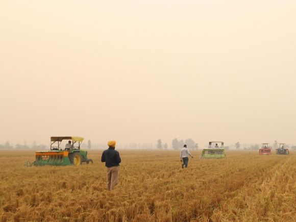 People working in field of crops