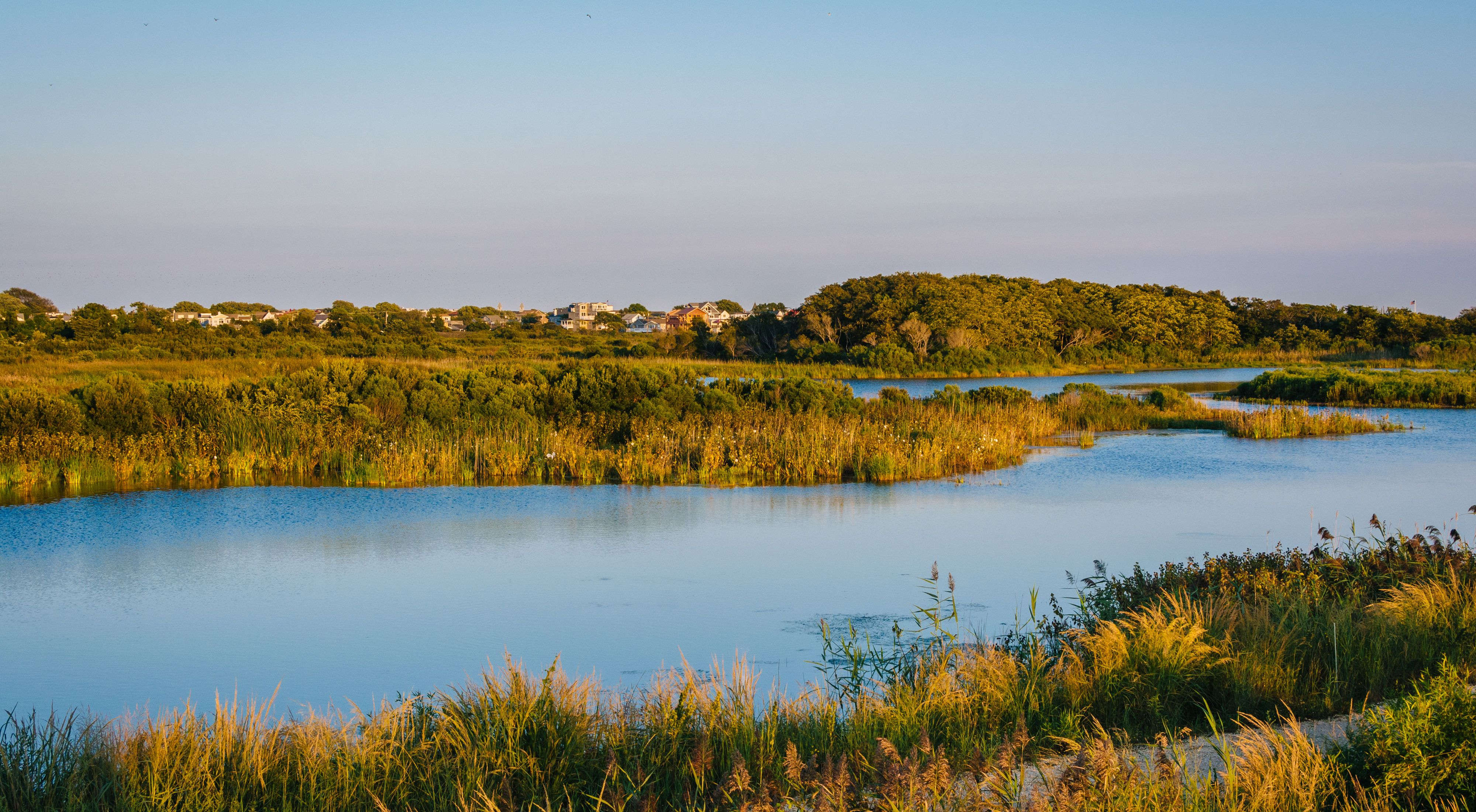 A freshwater pond is surrounded by tall wetland grasses. Overhead the moon is on display.