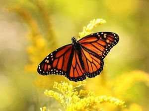 an orange and black butterfly on a purple flower