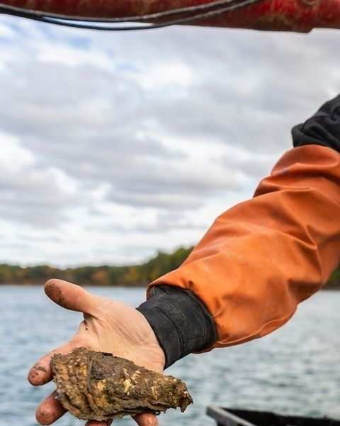 A man on a boat holding an oyster.
