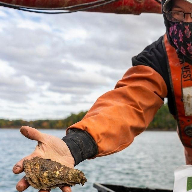Image of person holding an oyster