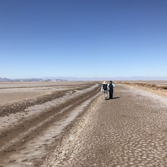 scientists walk in the dry Colorado River Delta