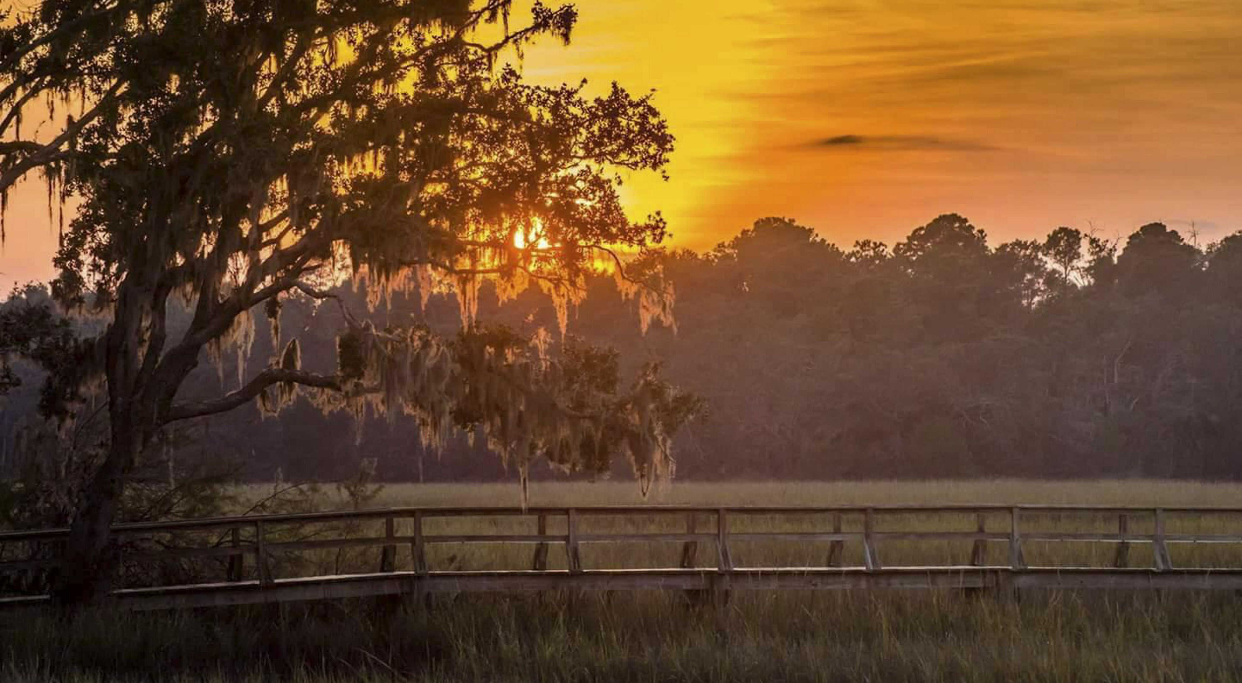 A perfect lowcountry sunset as seen through a moss draped oak tree.