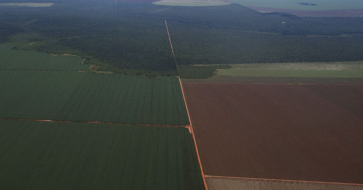 An island of native Cerrado grassland survives as an area of permanent protection under Brazilian law while soy encroaches from all sides.