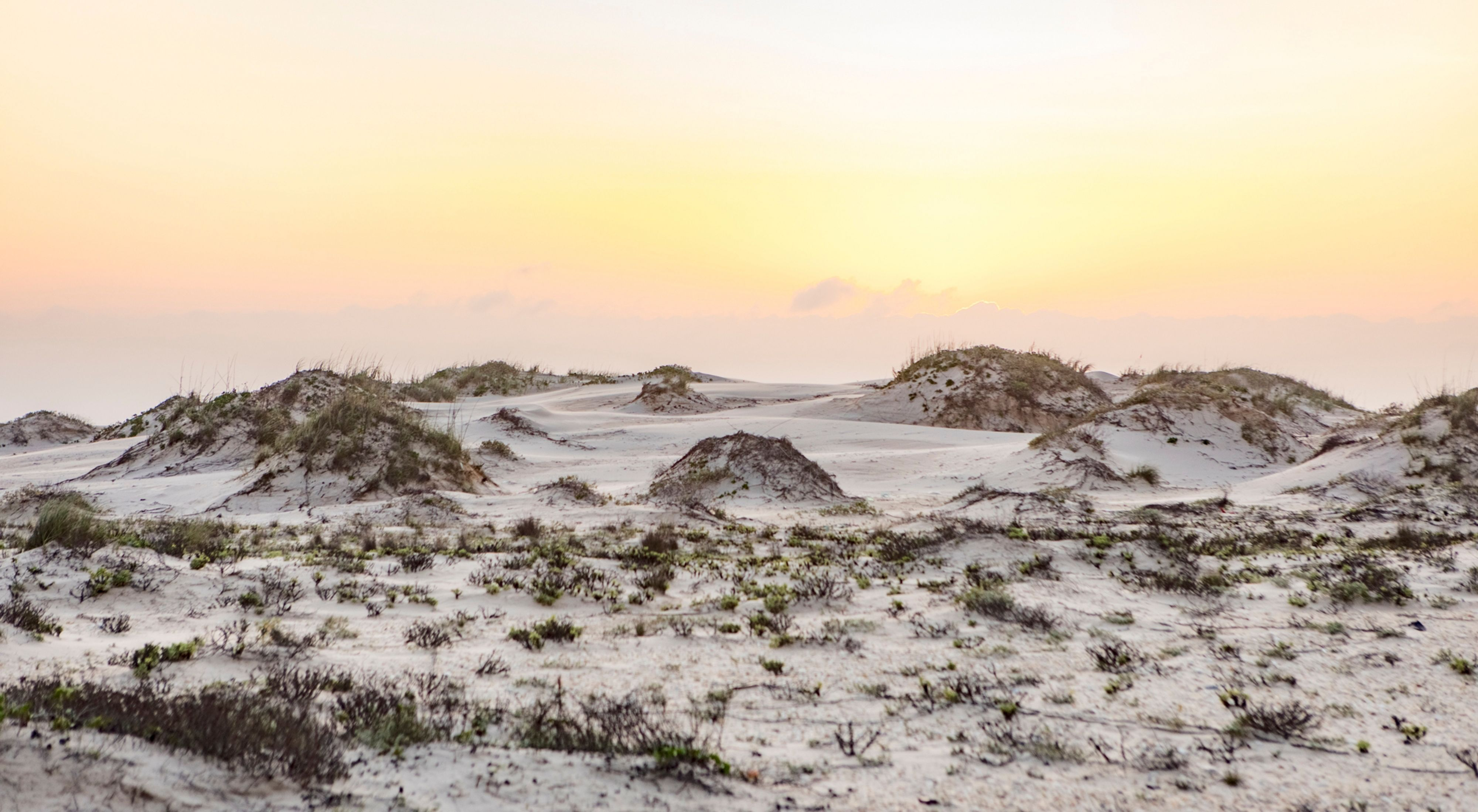 White sand dunes at sunset with some dune grasses growing on them.