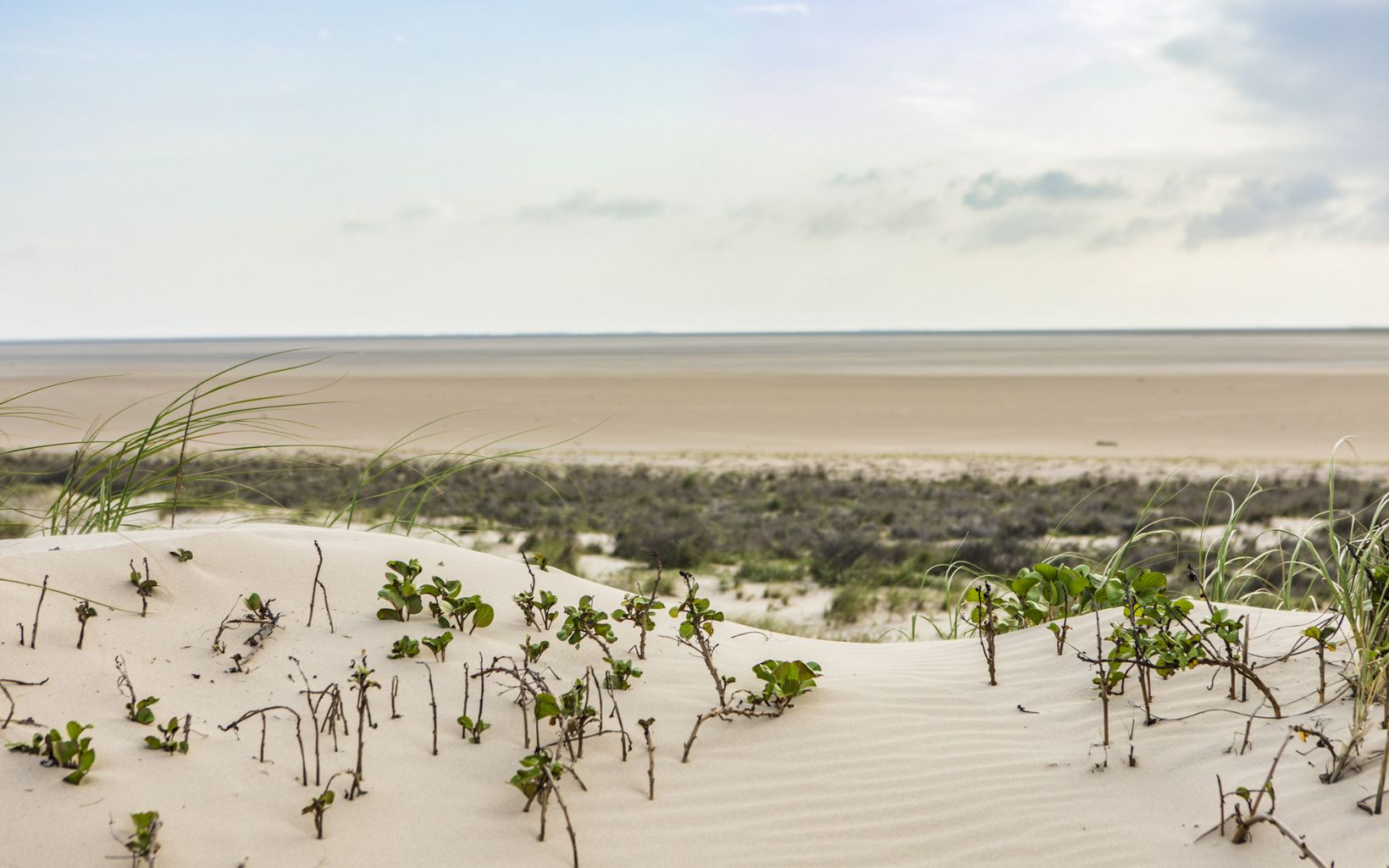 White sand dunes with plants growing on them and the ocean in the distance.