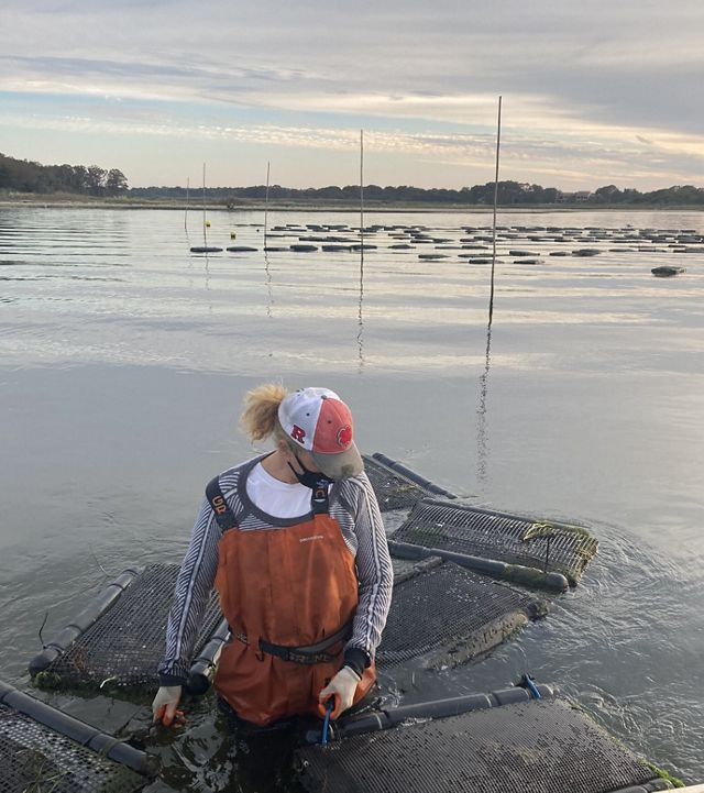 Sue Wicks, wearing a face mask, wades through her oyster farm pulling several floating cages.