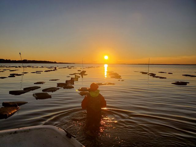 Sue Wicks looks towards the rising sun while wading in the waters of her oyster farm in New York.