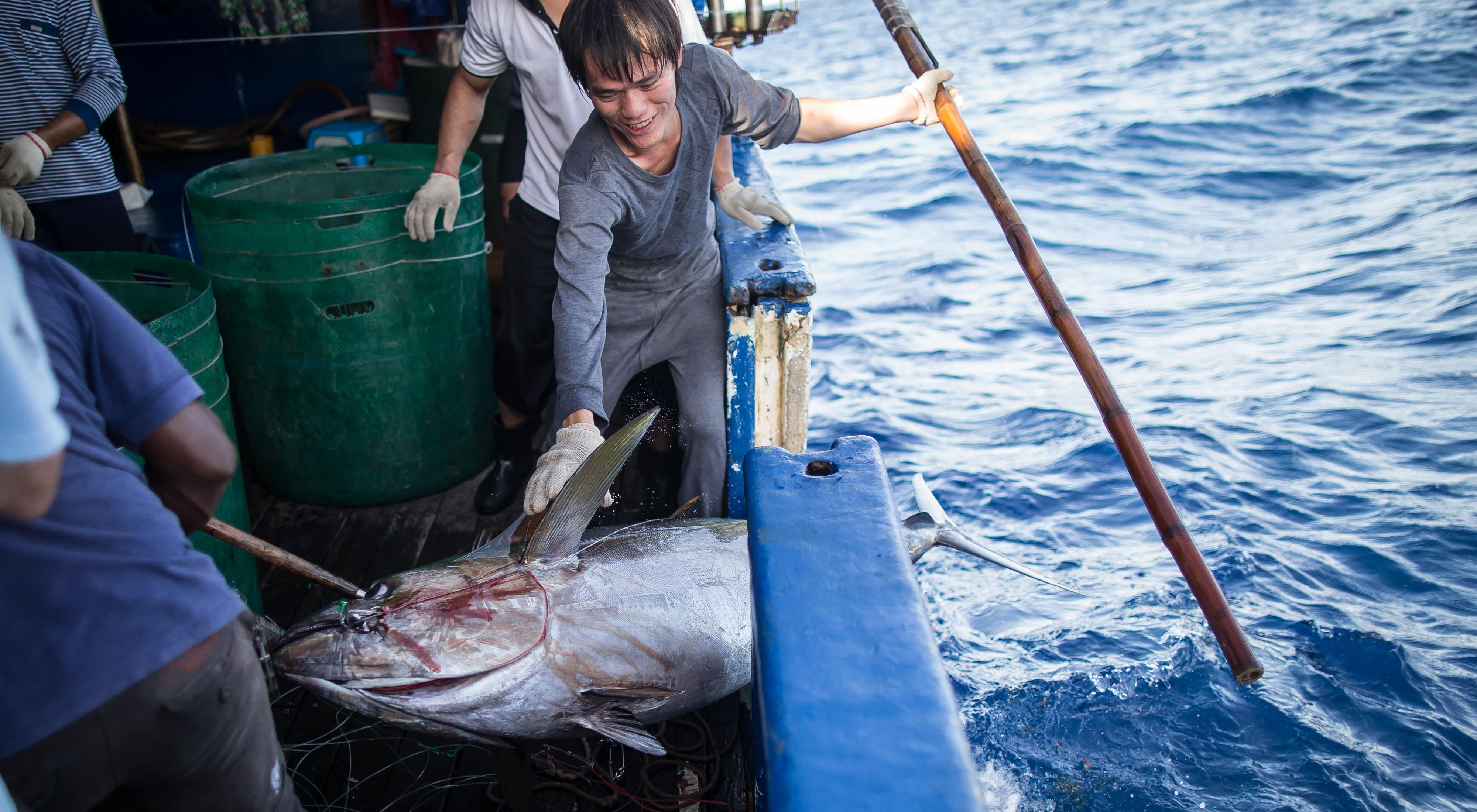 Fishing for bigeye tuna in the Pacific