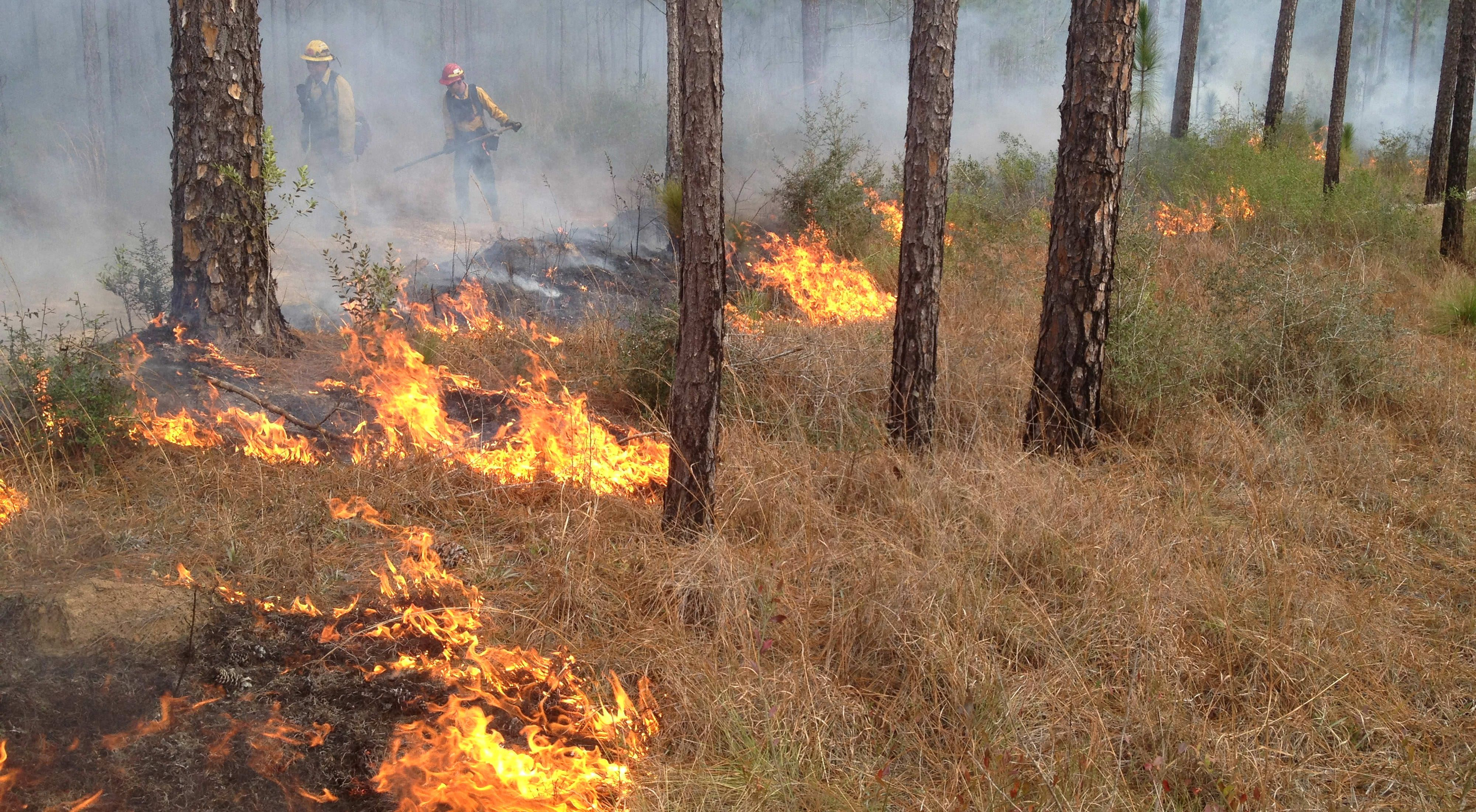 A prescribed burn at the Sweetbay Bogs Preserve