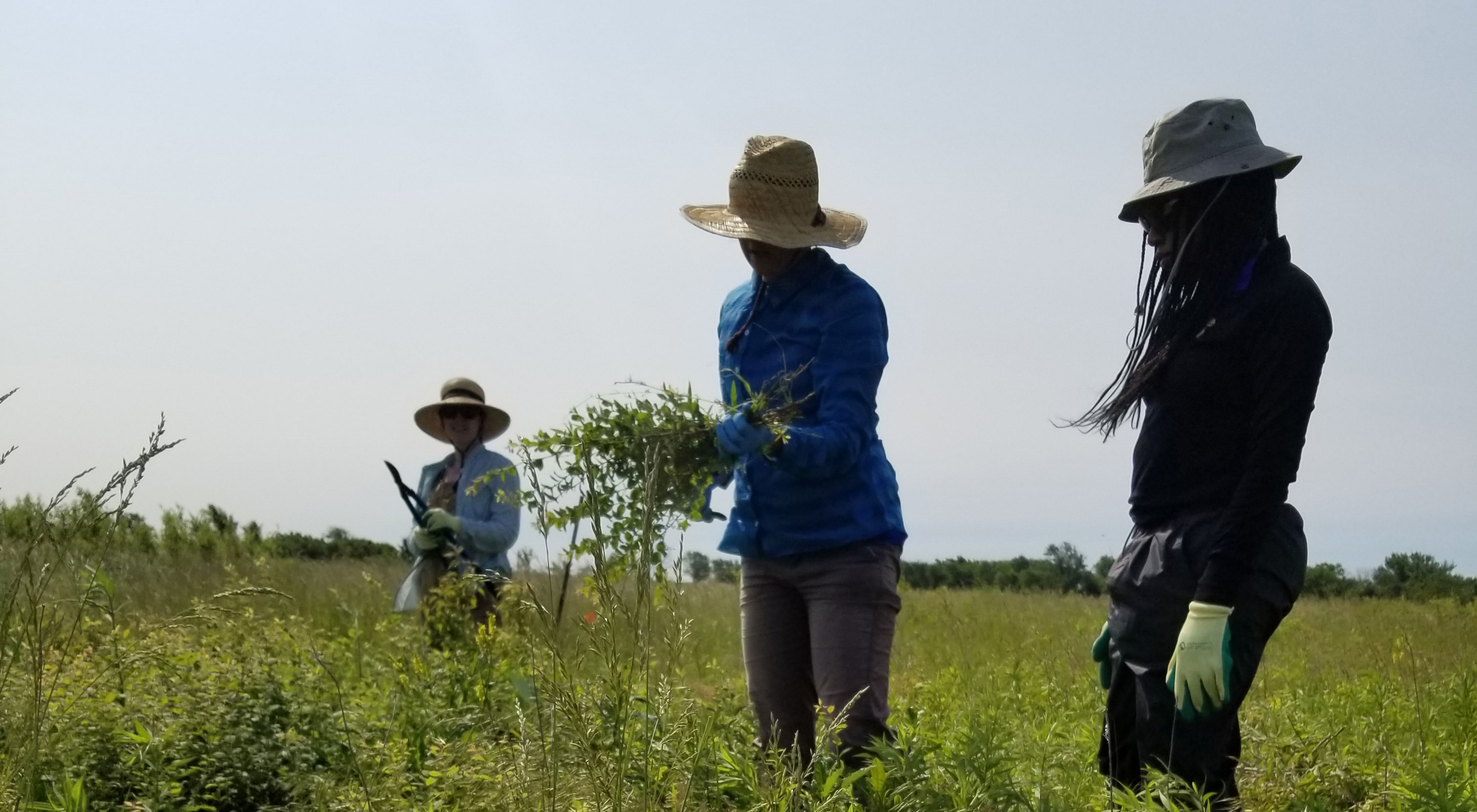 A group of volunteers clear invasive woody plants at Anderson County Prairies in Kansas.