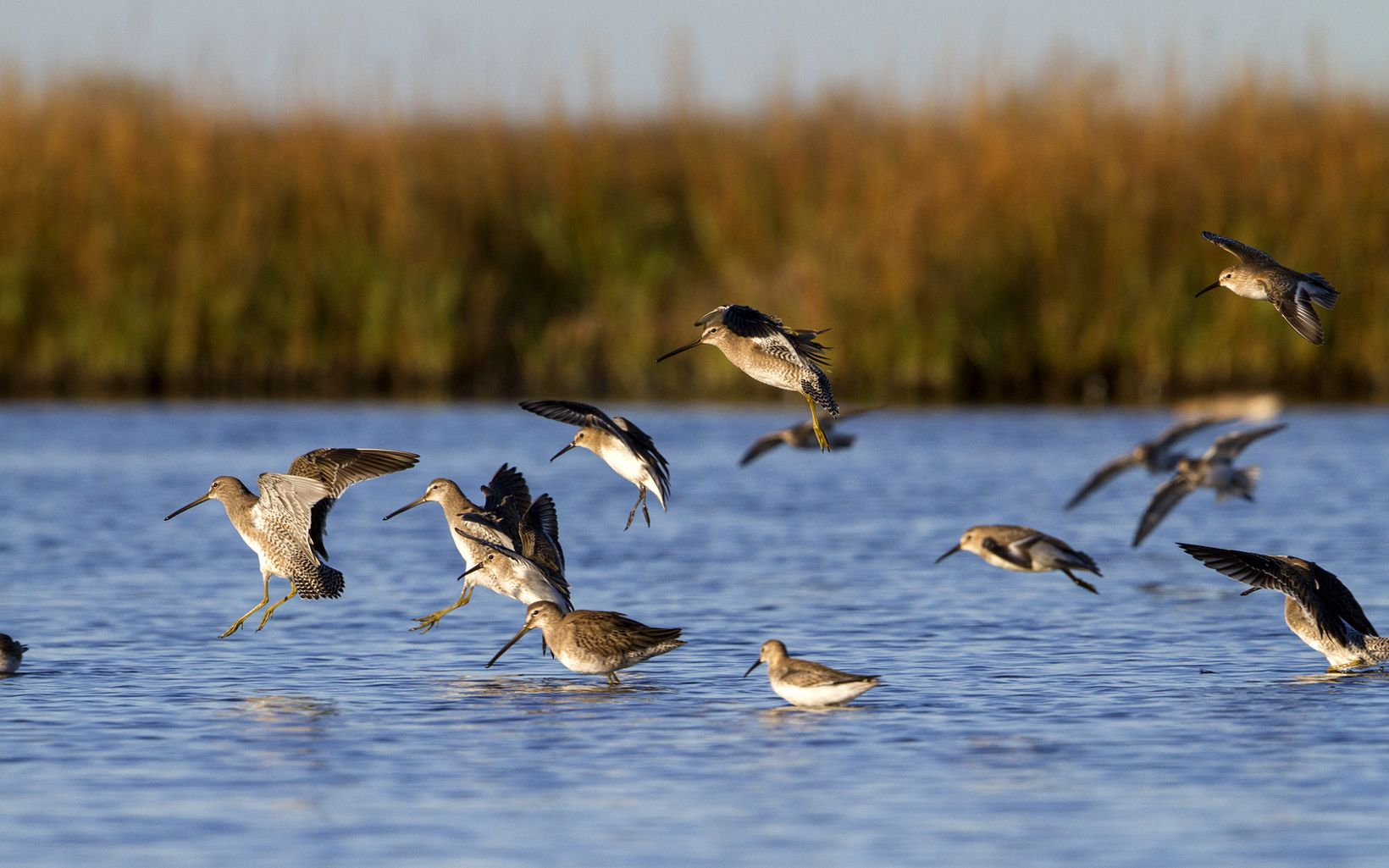 The Mad Island Marsh Preserve protects 7,063 acres, including rare tallgrass coastal prairies.