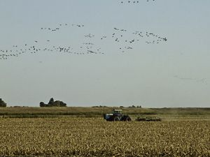 Birds and tractors on a field.