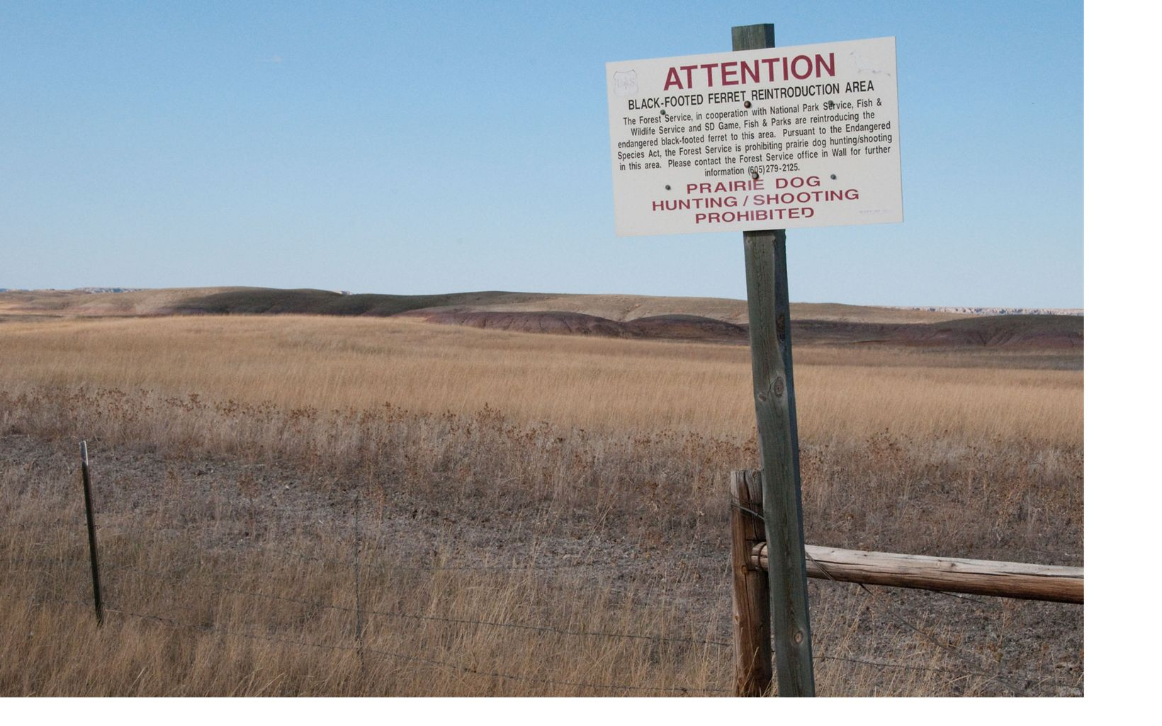reintroduction area sign and grasslands in the Conata Basin, South Dakota.