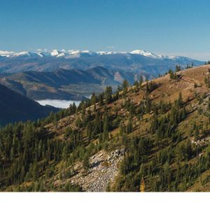 Restoring Montana's Forests