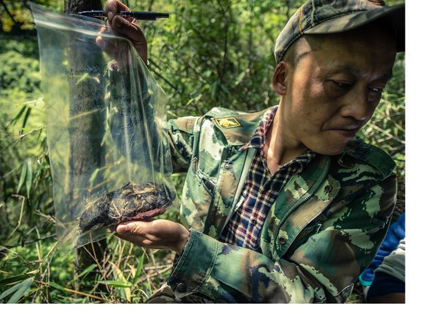 A ranger holds up a bag of panda scat which will be analyzed