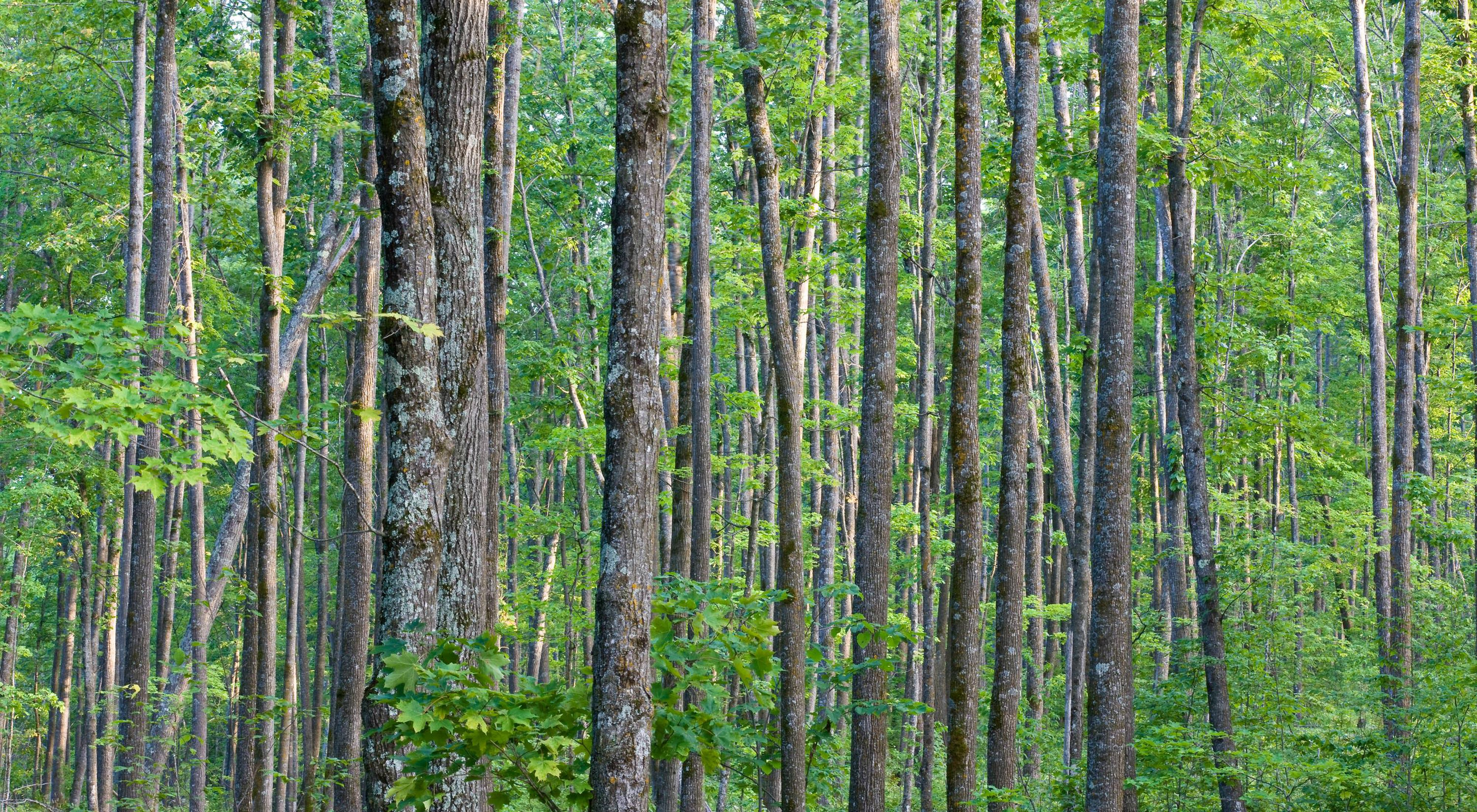 A mixed species hardwood forest
