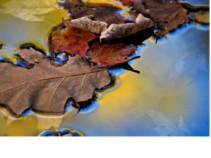 Fall leaves on a pond.