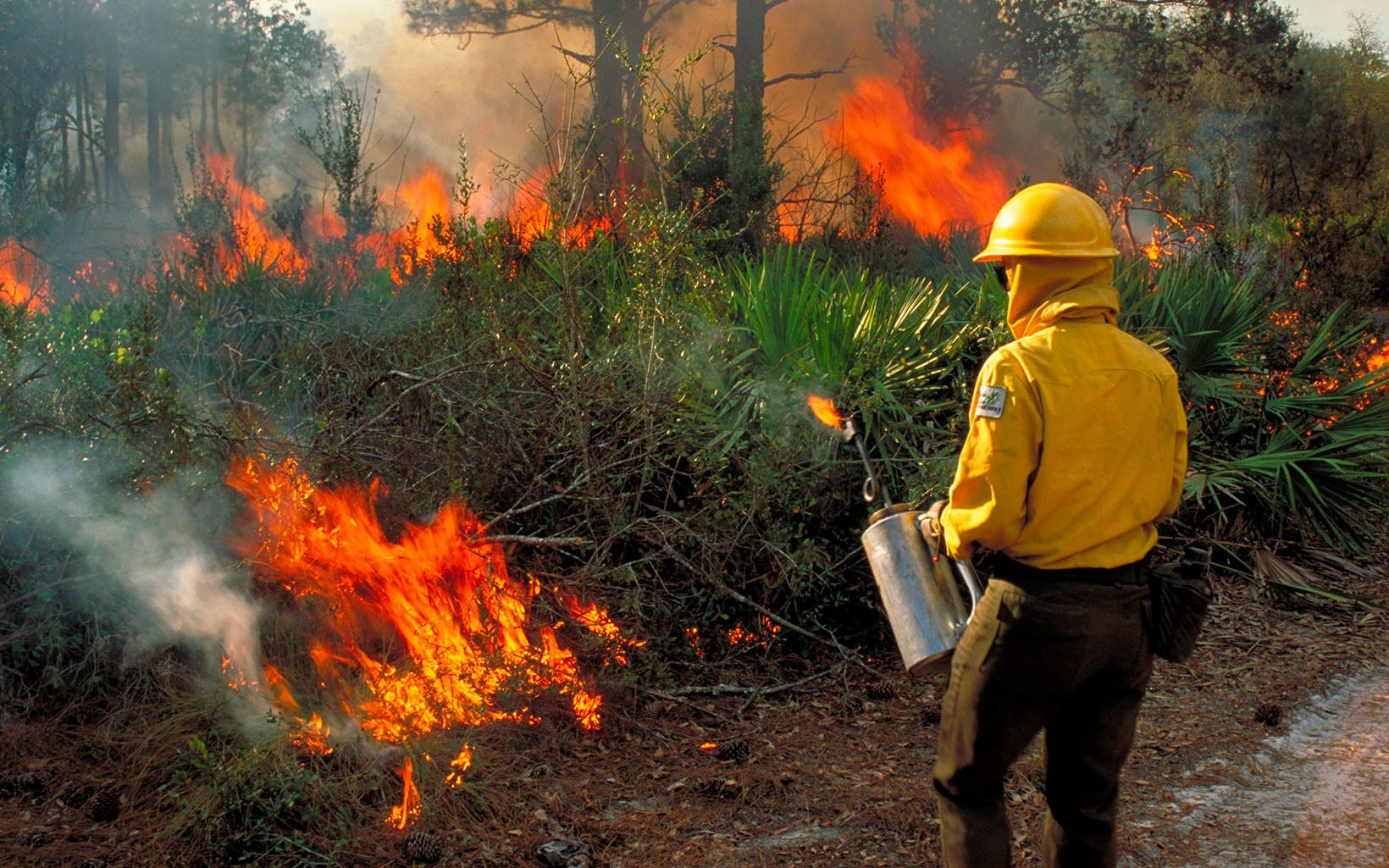 Prescribed fire in Florida