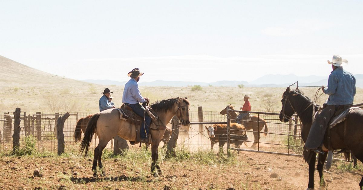 Ranch hands gather to prepare a calf for branding