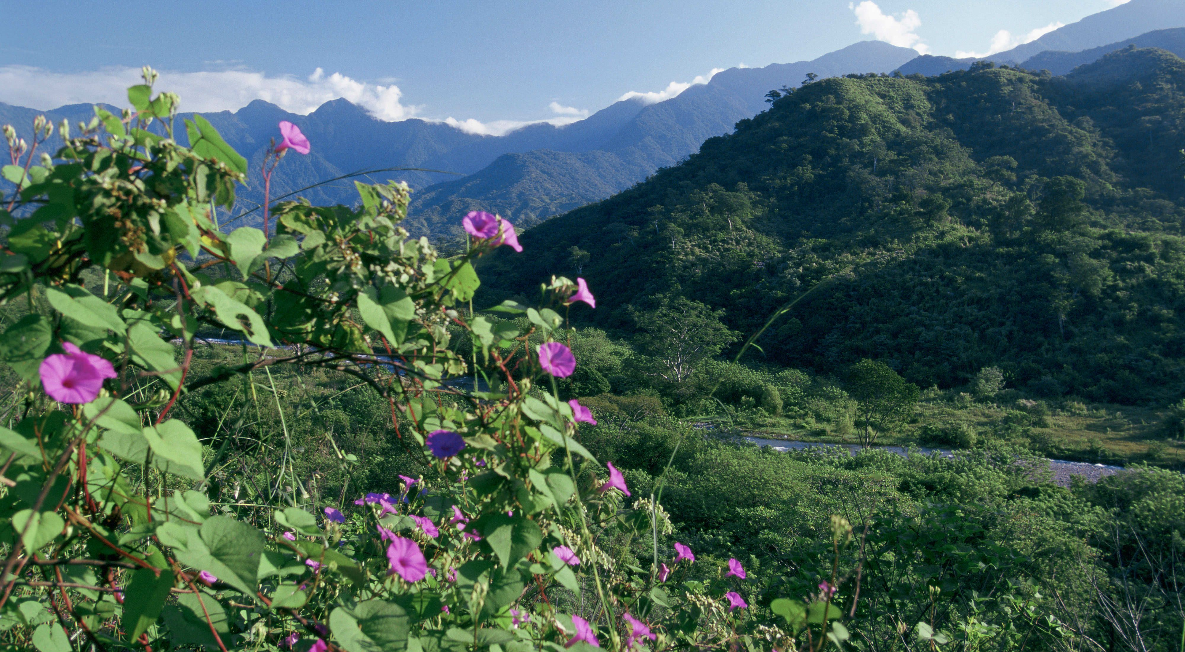 Flowers bloom in the foreground with lush forested moun