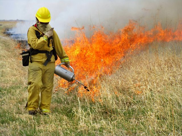 A burn crew member in full gear starting a fire in prairie grass.