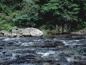 The Conasauga River in Tennessee rushes past rocks and trees along the bank.