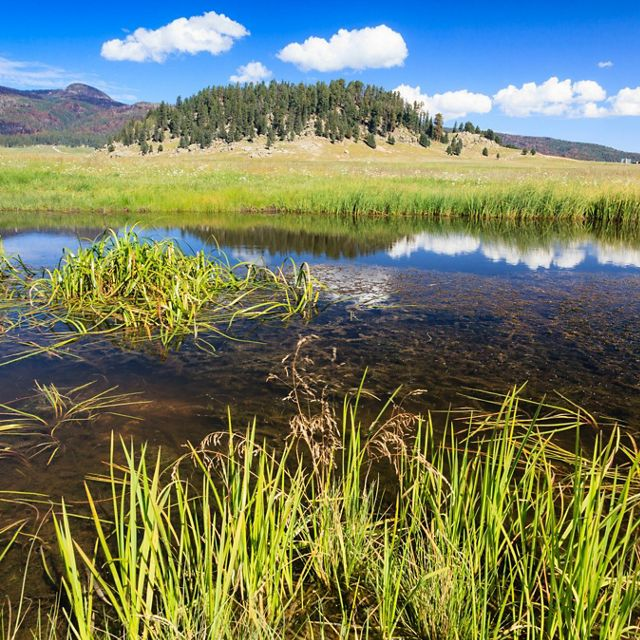 Wetlands at Valles Caldera National Preserve. New Mexico's Rio Grande and its tributaries supply water to more than half of New Mexico's population.