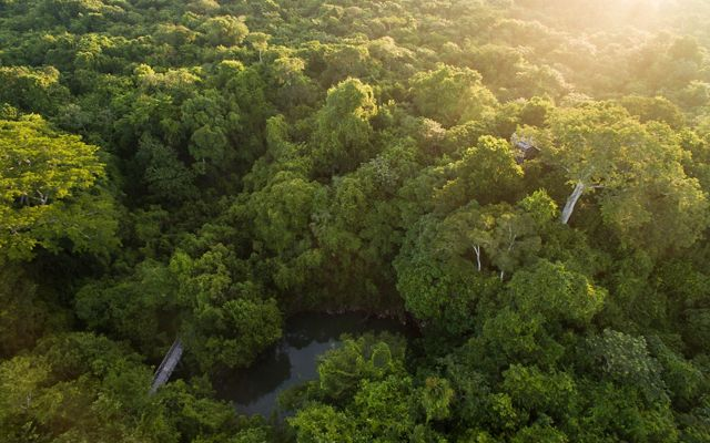 Aerial views of the hardwood forest around the logging community of Noh Bec, Quintana Roo.