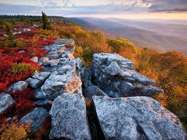(ALL INTERNAL, LIMTED EXTERNAL USES)  Fall color at The Nature Conservancy's Bear Rocks Preserve in West Virginia.  High above Canaan Valley, in Dolly Sods, where a flat, windswept expanse of subalpine heath barrens opens up to the sky. Stunted red spruce, ancient bogs and forlorn boulders define this haunting landscape, where creatures typically found in more northern environs roam oblivious to their geologic isolation. The Nature ConservancyÕs 477-acre Bear Rocks Preserve is a cornerstone of this wonderfully diverse and complex ecosystem, which lies on a ridge crest that forms part of the Eastern Continental Divide.  PHOTO CREDIT: © Kent Mason