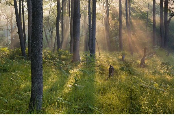 Trees in Canaan Valley Wildlife Refuge in West Virginia.