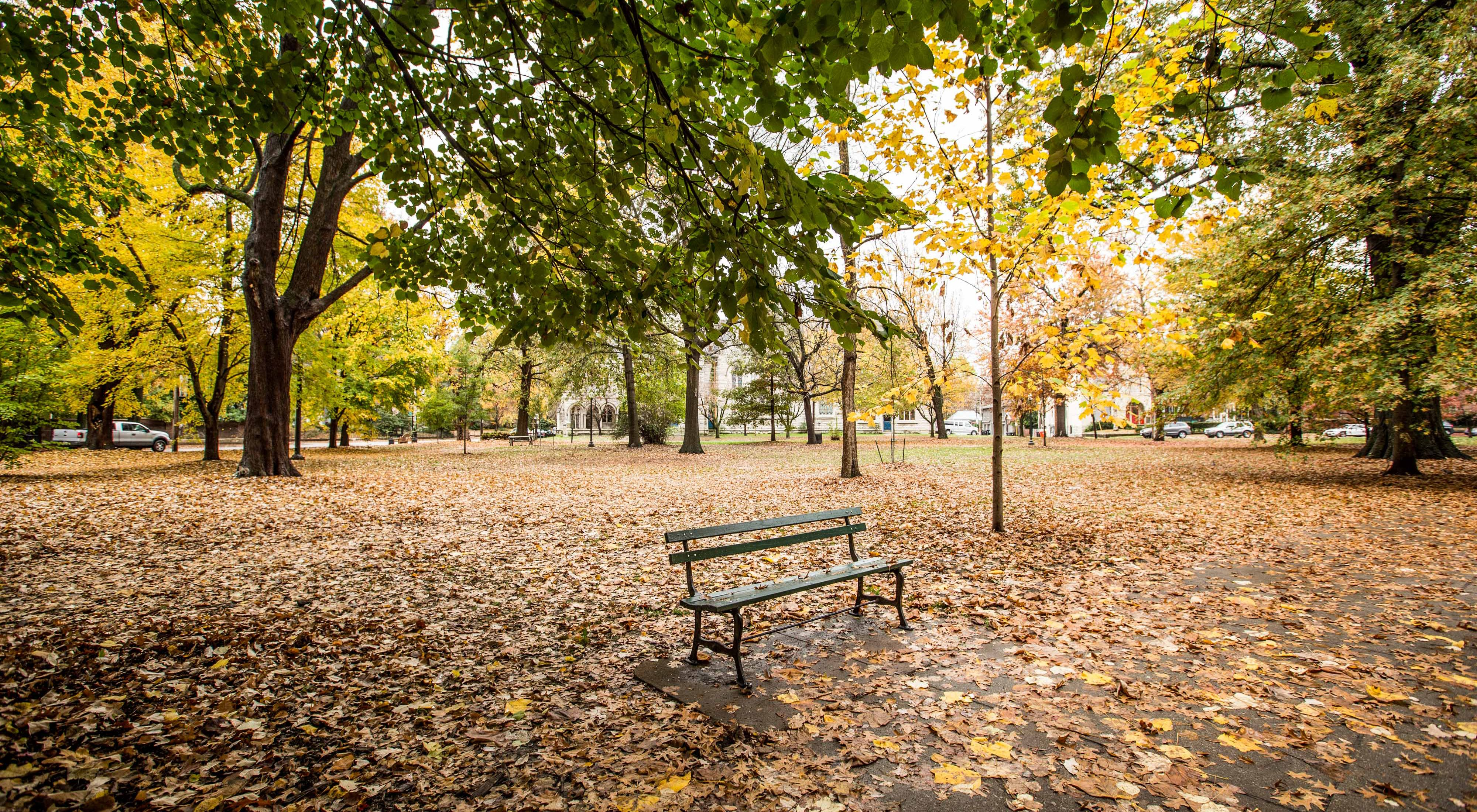park bench surrounded by autumn trees in a city.