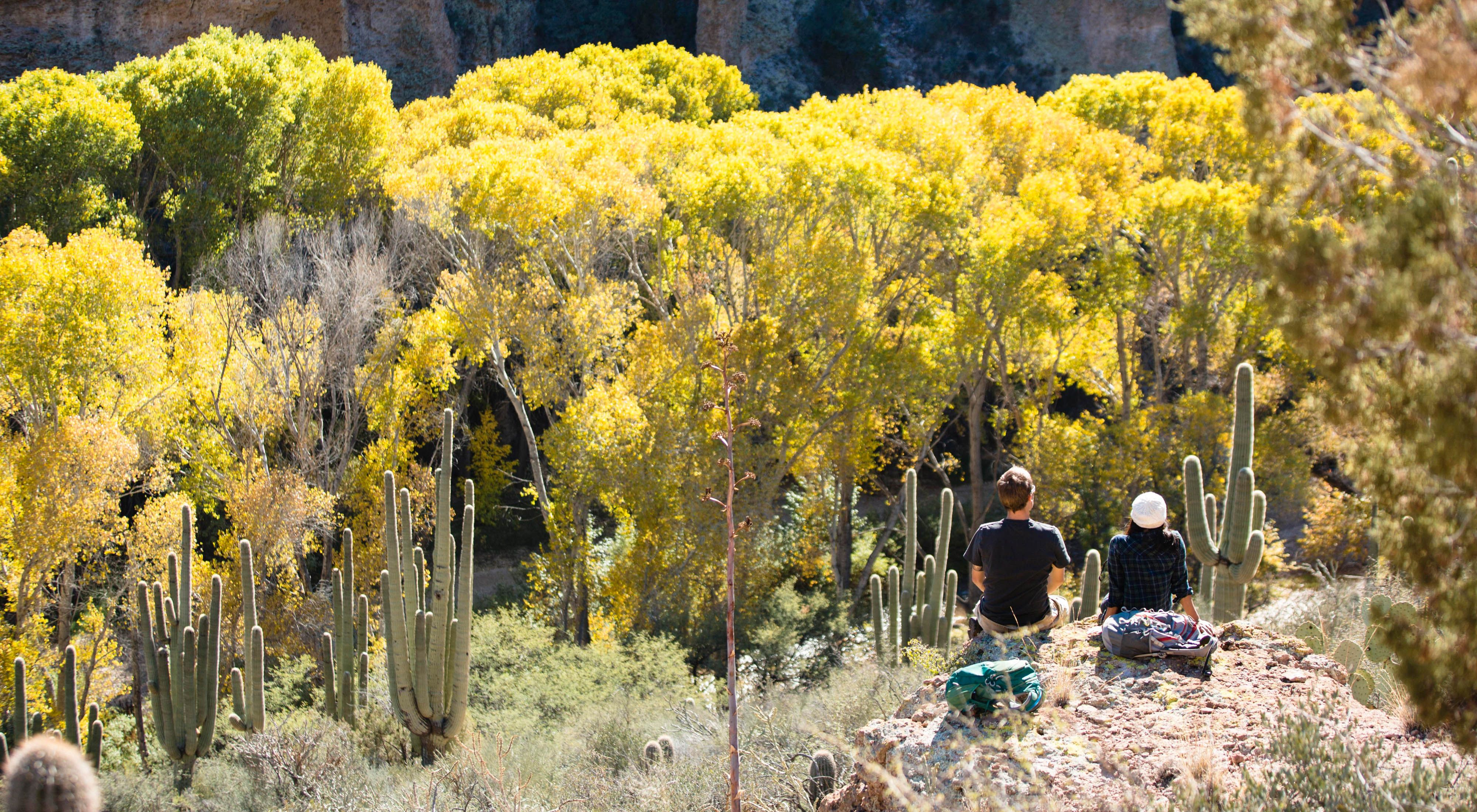Hikers viewed from behind sitting on a slope surrounded by cactuses, trees and shrubs.