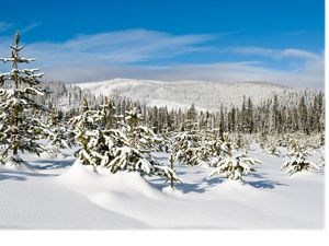 Lolo Pass is one of the most important recreational access areas for the people of Missoula, Montana. TNC and the Trust for Public Land purchased roughly 320,000 acres of Plum Creek Timber Company timberlands, including lands in Lolo Pass.