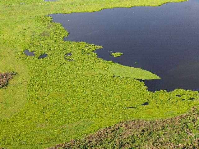 Aerial view of Marshland of Jaraba near the town of Santa Ana in Magdalena