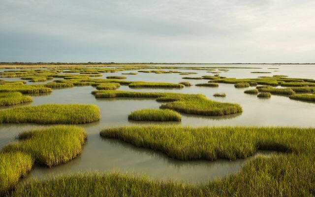 in Calhoun County is one of the few remaining large tracts of intact native coastal prairie and wetlands on the Texas coast.
