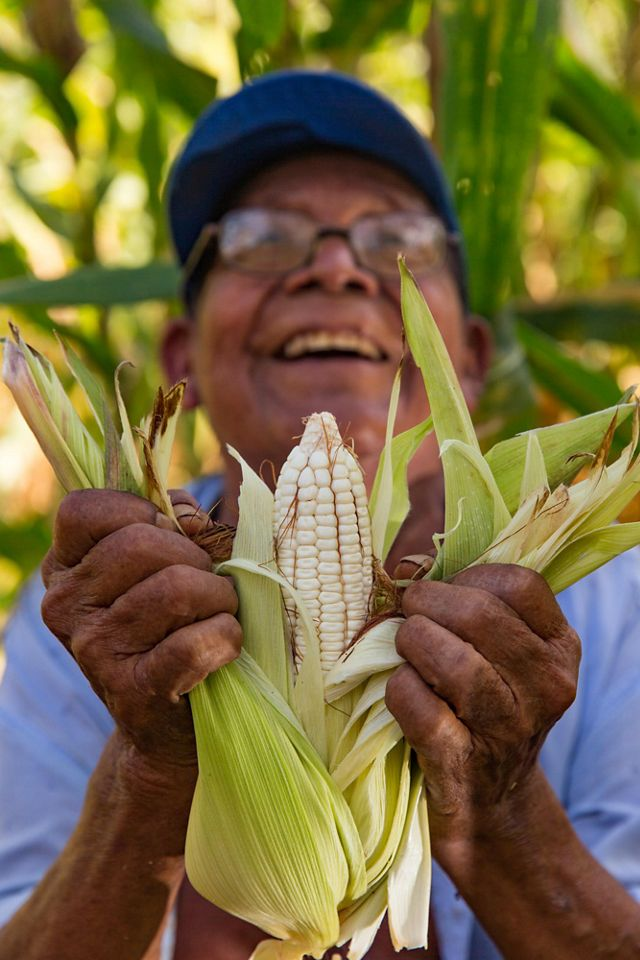 A man smiles as he holds up freshly picked corn