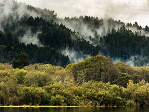 The Yurok Tribe, the largest tribal group in California, owns land around the Klamath River and are participants in California's forest carbon offset program.