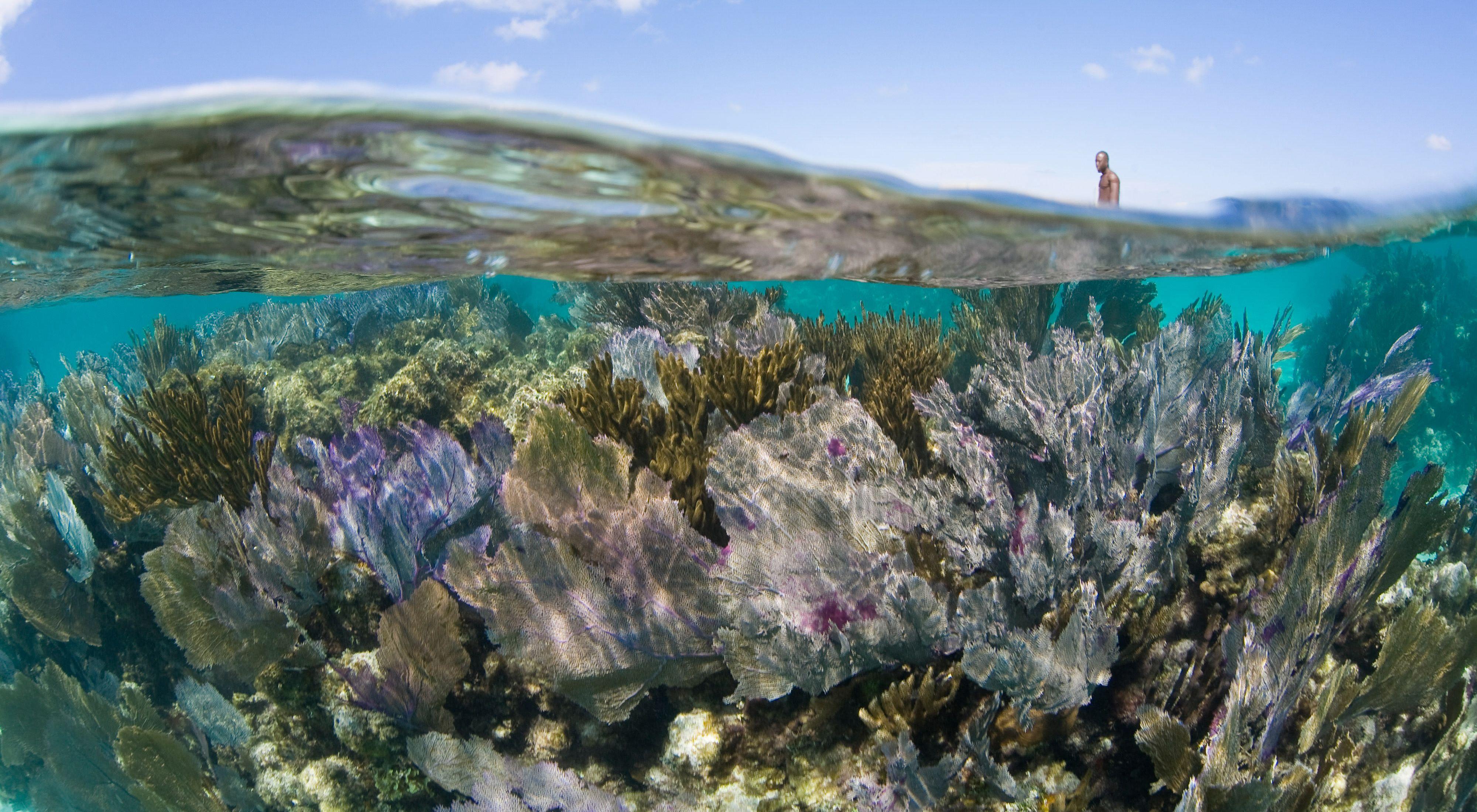 Gorgonians, blue sky and kayaker, Turneffe Atoll, Belize, Caribbean.