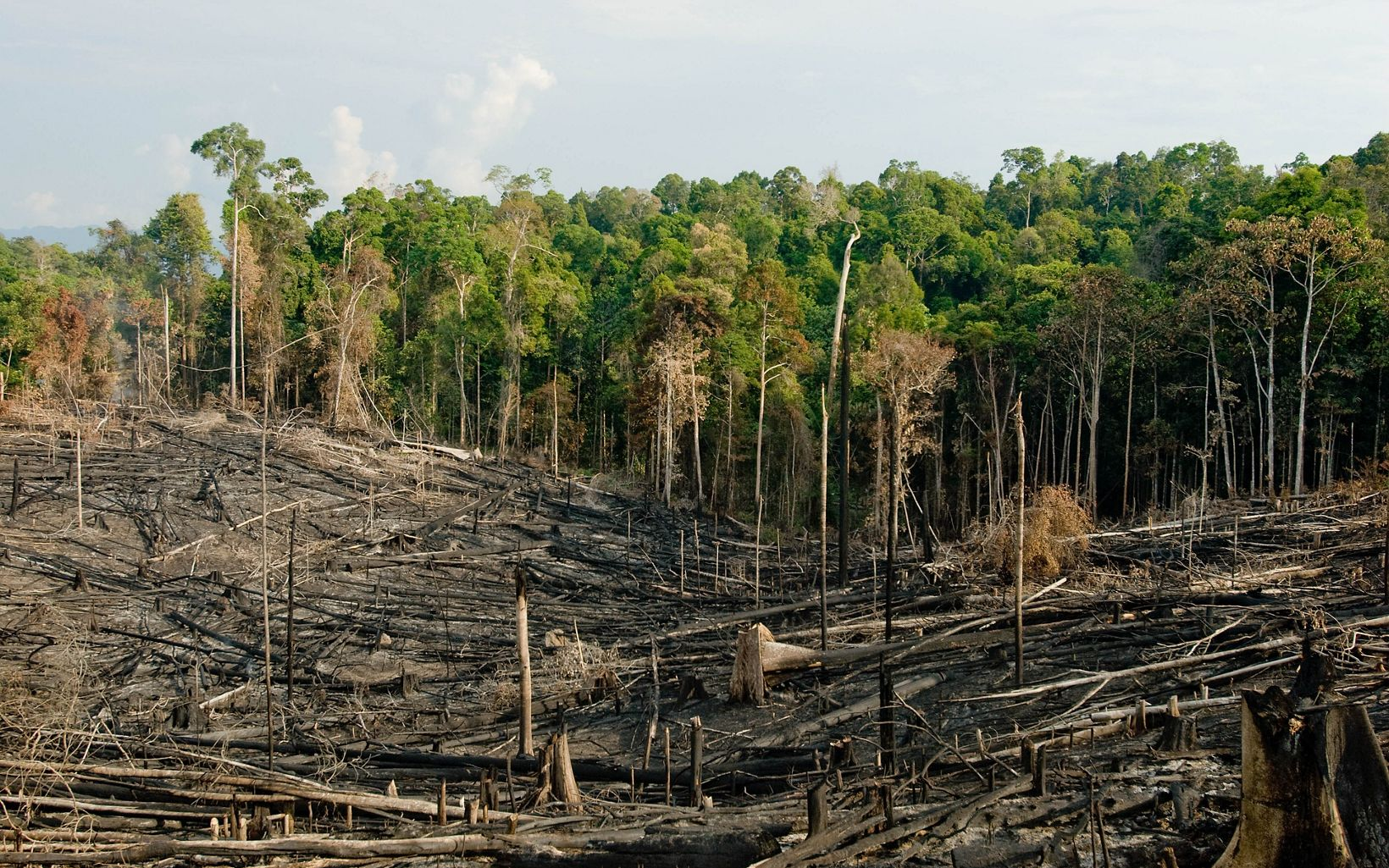 Tropical forest areas that have been deforested through a process of slash and burn to open areas for agriculture and subsistence farming in the Kalimantan region of Borneo, Indonesia.