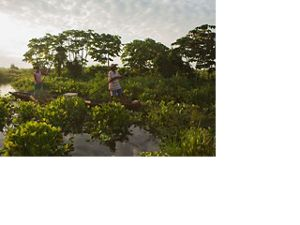 through the Marshland of Barbacoas in the mouth of the Magdalena River Basin in Antioquia, Colombia.
