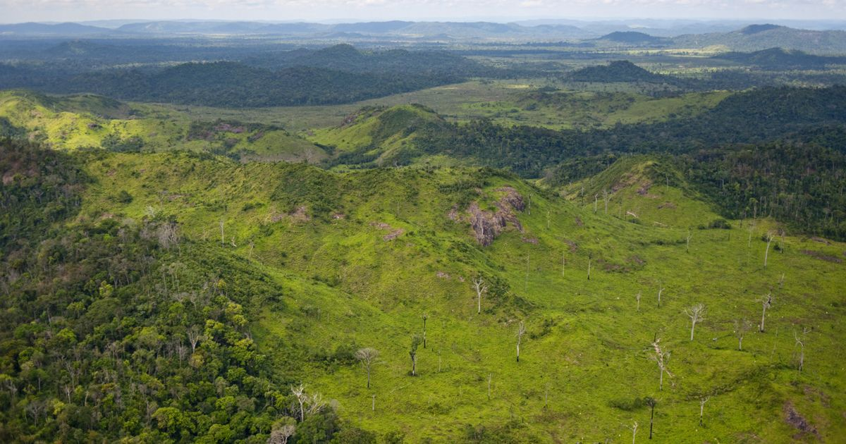 An aerial view of cattle ranching in the Brazilian Amazon. The area has one of the highest rates of deforestation in the country.