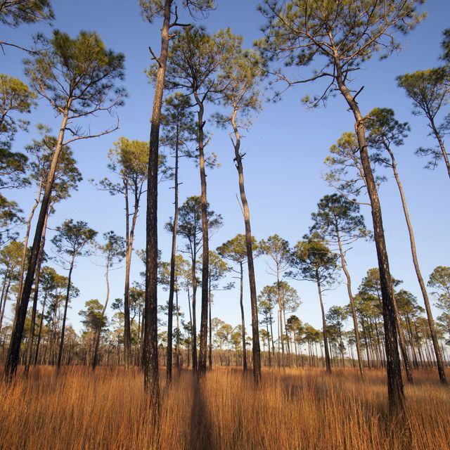 Grand Bay National Wildlife Refuge, Alabama, which was protected using LWCF funds.