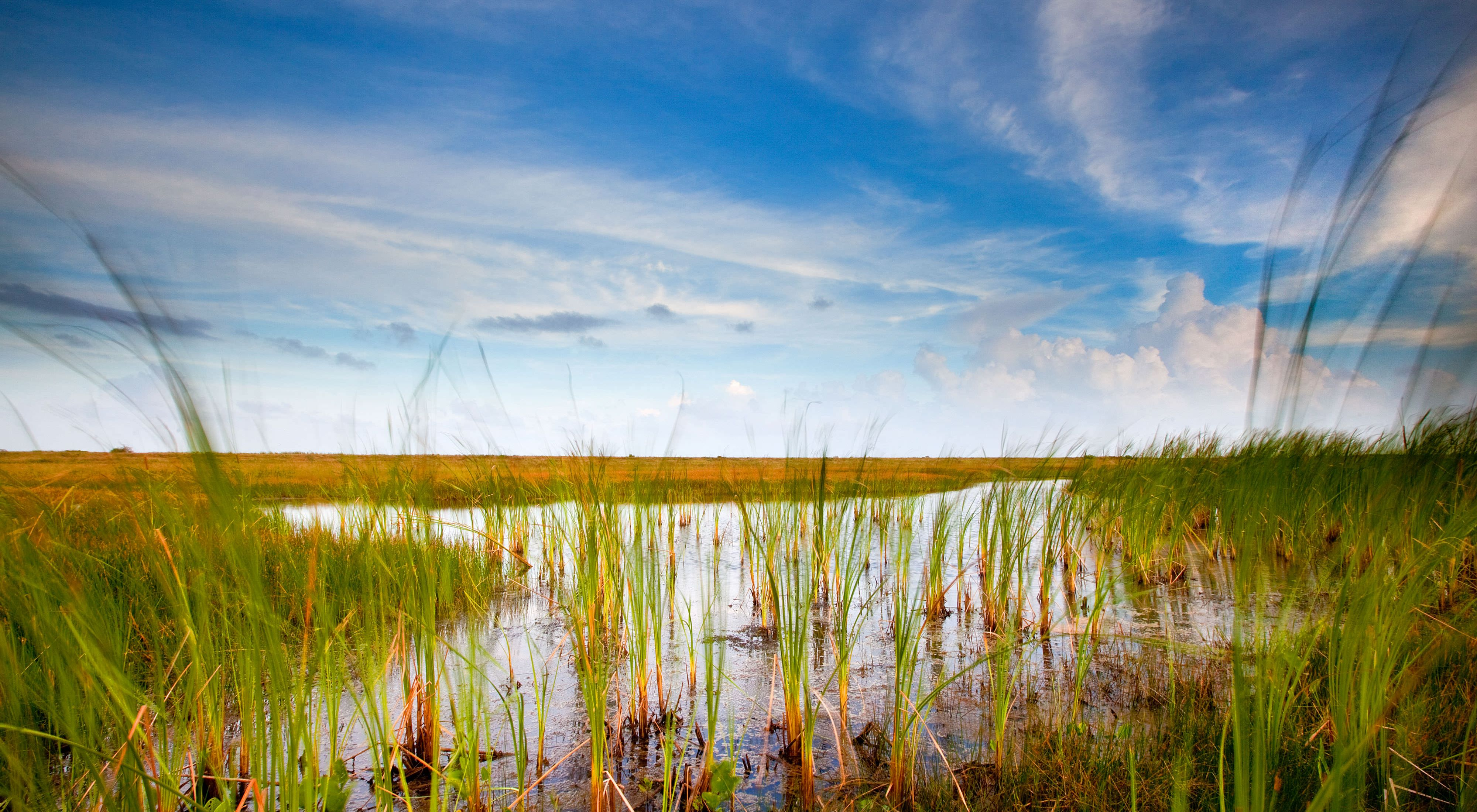 Mad Island Marsh Preserve, Texas: Landscape of the marsh during sunset.