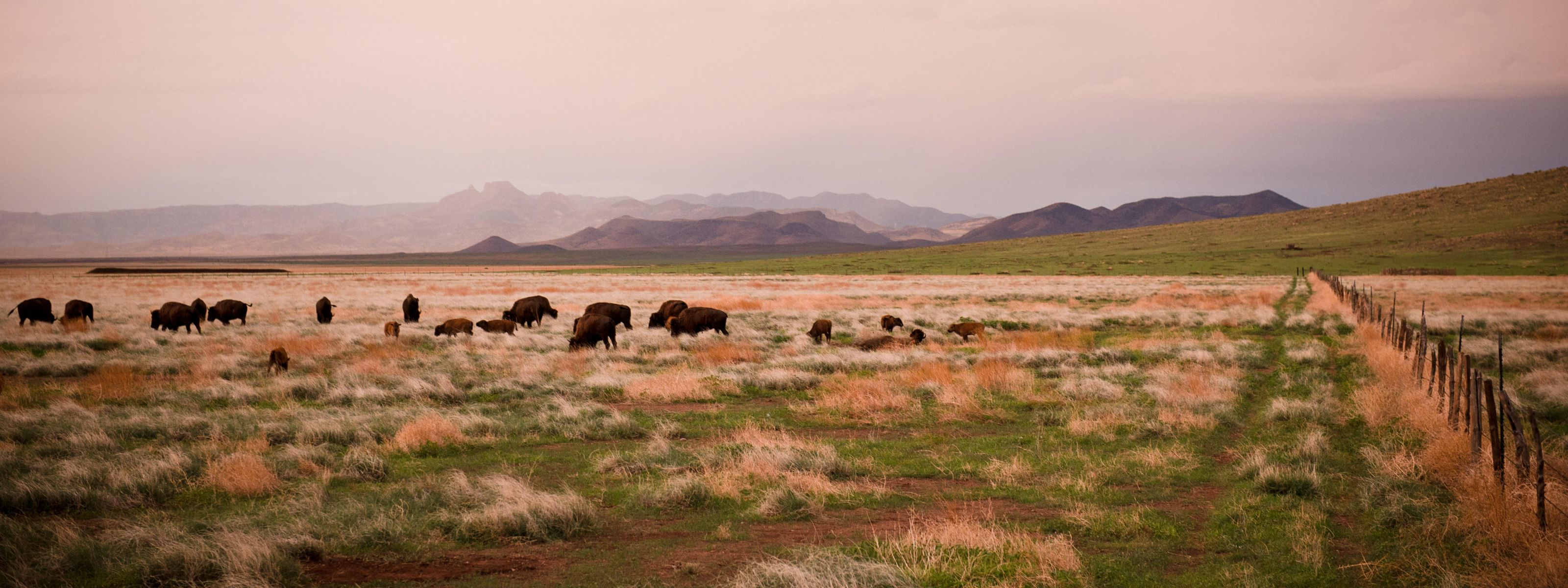23 bison were reintroduced at El Uno Ecological Reserve in November of 2009, a donation of the Wind Cave National Park, South Dakota.