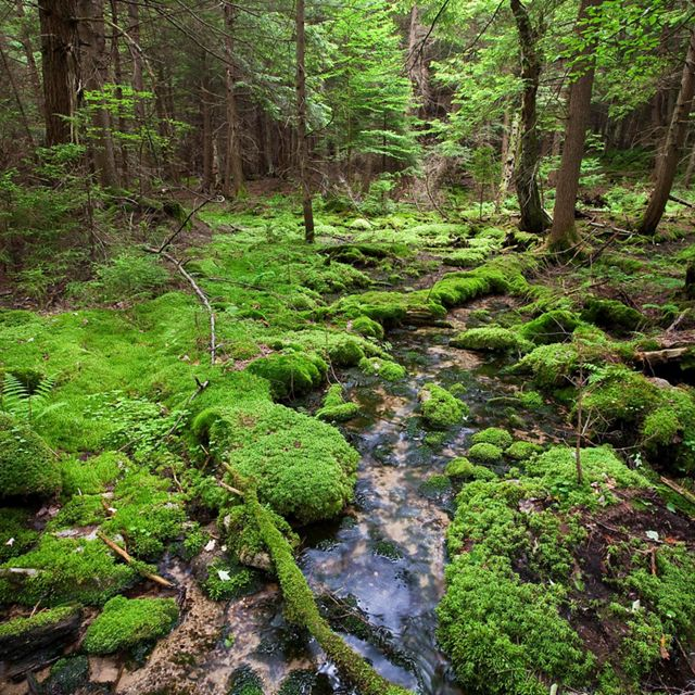A stream in the Wooded Hemlock Bog at The Nature Conservancy's Cranesville Swamp Preserve in northern West Virginia. Natural forest management strategies can reduce carbon emission by 882 million tonnes each by 2030.