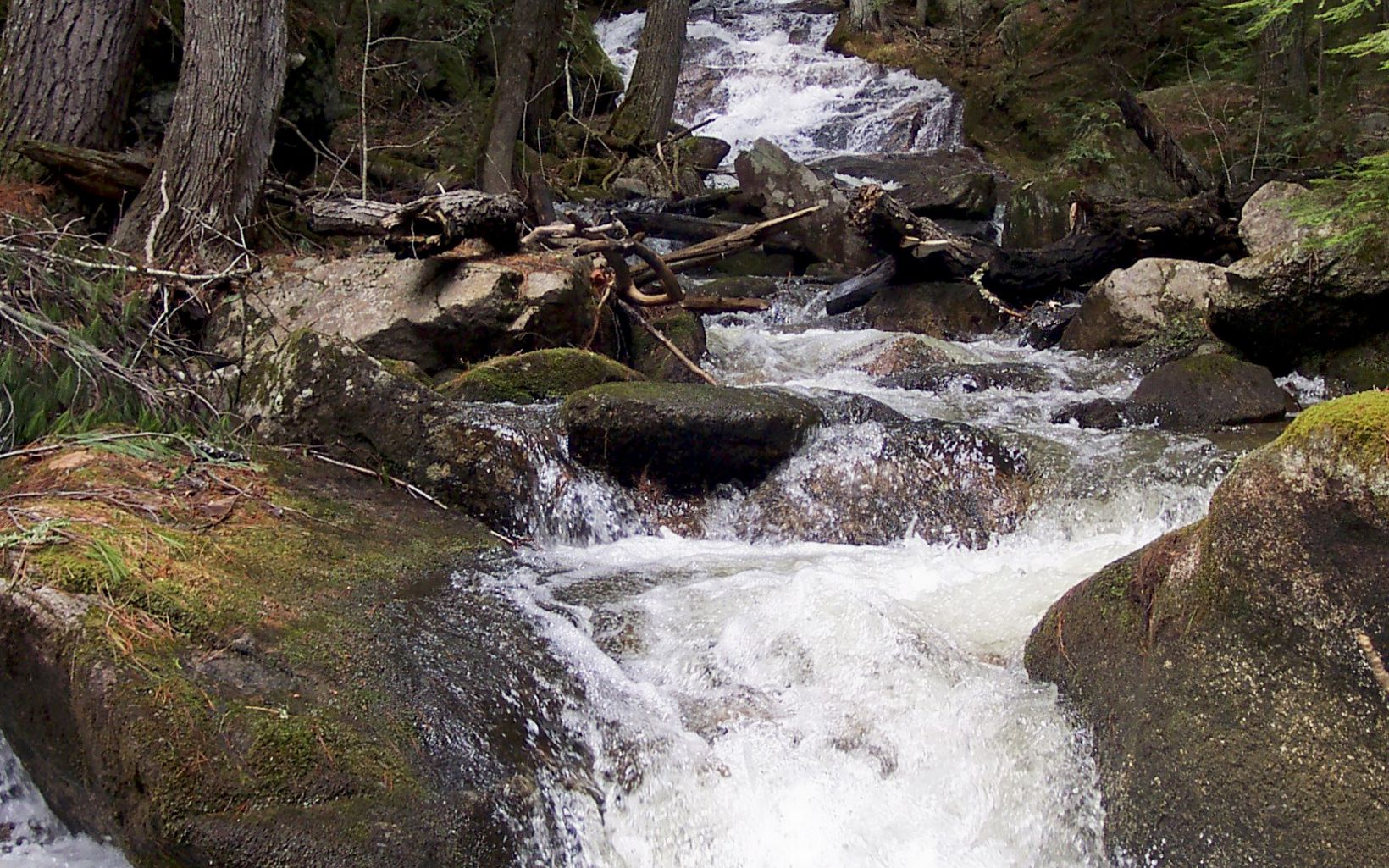 View of forest stream in the Debsconeag Lakes Wilderness Area, an ecological reserve and vital link in nearly 500,000 acres of contiguous conservation land in Maine.