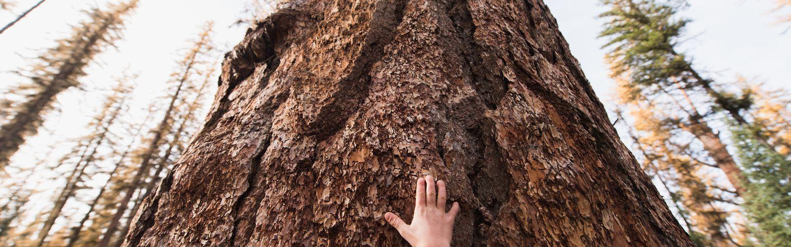 Ayúdanos a plantar árboles