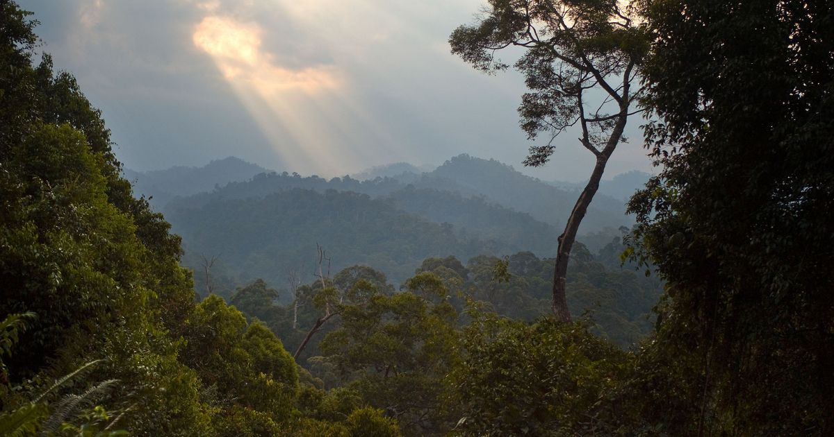 The dense tropical Wehea forest in the Kalimantan region of Borneo, Indonesia.